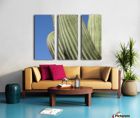 Saguaro Cactus Photograph Split Canvas print