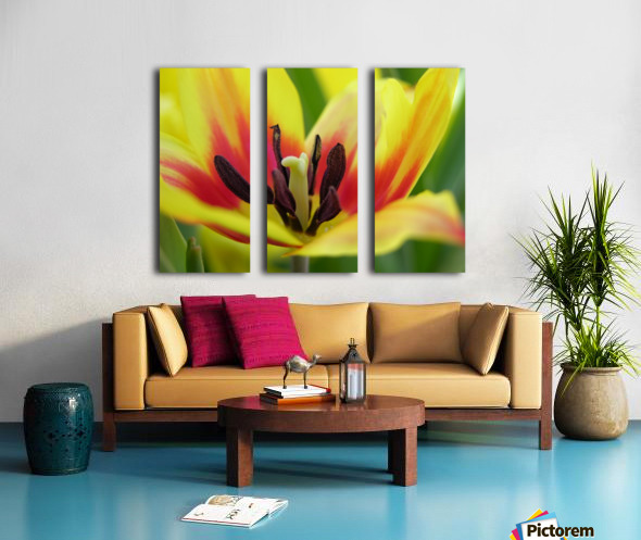 Yellow Tulip Photograph Split Canvas print