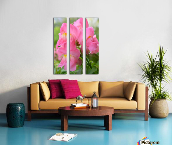 Pink Snapdragon Photograph  Split Canvas print
