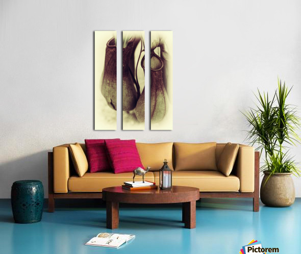 Nepenthes Split Canvas print
