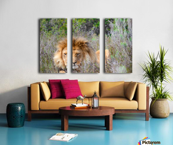 King of the Jungle Split Canvas print
