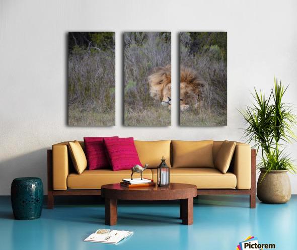 The Lion Sleeps Tonight Split Canvas print