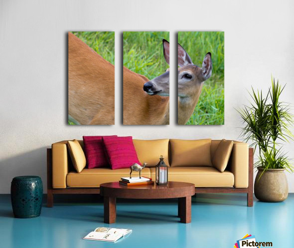 Summer Doe Split Canvas print