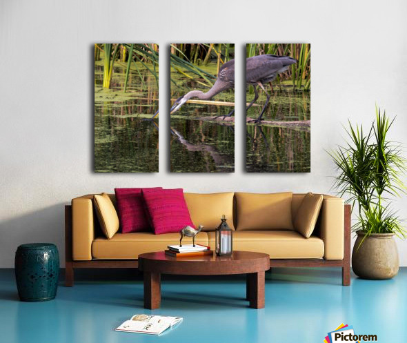 Great Blue Heron taking a Sip Split Canvas print