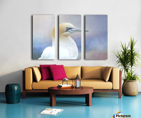 Northern Gannet Split Canvas print