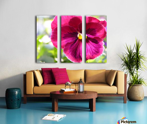 Pink Pansy Photograph Split Canvas print