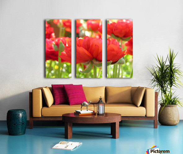 Red Rose Garden Photograph Split Canvas print