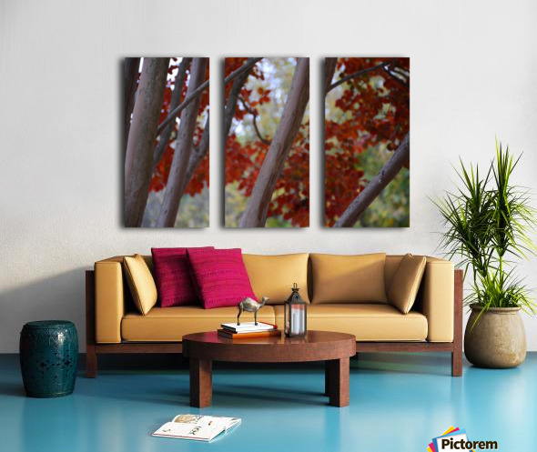 Fall Foliage Photograph Split Canvas print