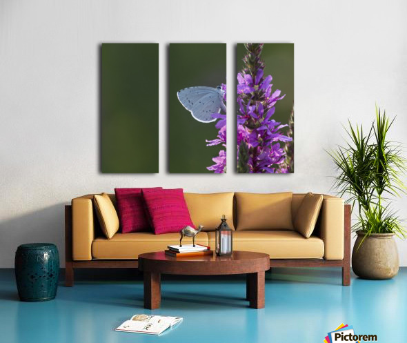 Butterfly on a flower Split Canvas print