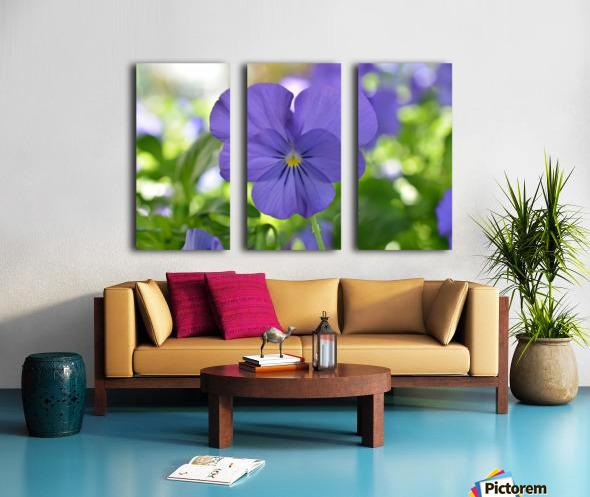 Blue Pansy Photograph Split Canvas print