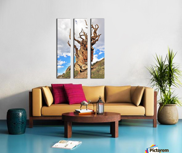 Ageless Split Canvas print
