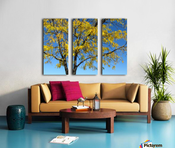 Beautiful Yellow Fall Foliage Split Canvas print