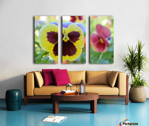 Yellow Pansy Covered In Due Photograph Split Canvas print