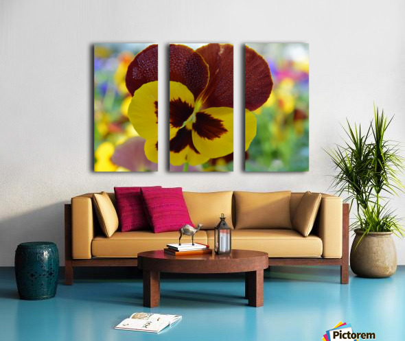 Yellow Pansy Covered In Due Drops Split Canvas print