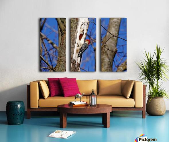 Red Bellied Woodpecker Split Canvas print