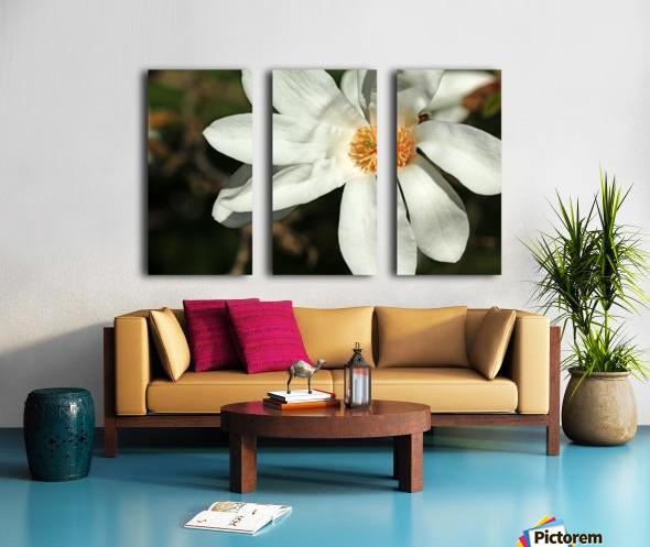 White Magnolia Split Canvas print