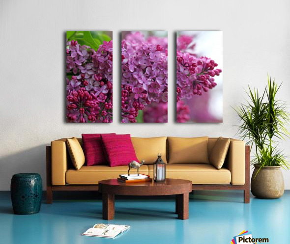 Lilac Heaven Split Canvas print