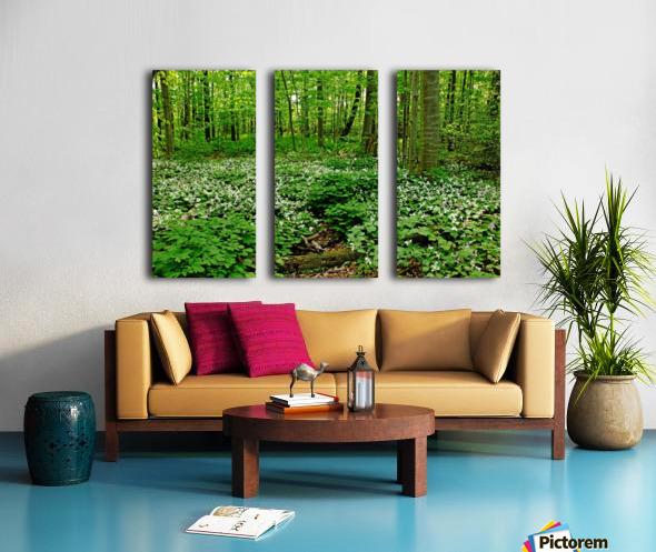Trillium Woods VI Split Canvas print
