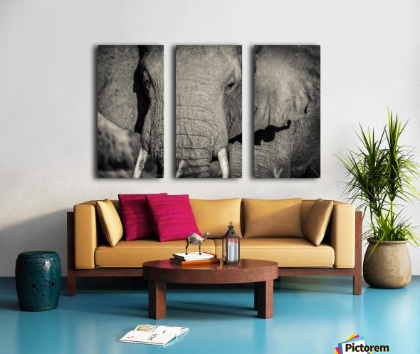 Elephant Portrait Split Canvas print