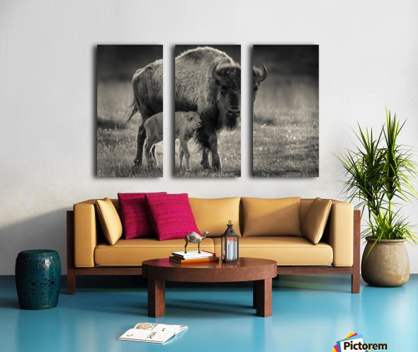 Bison love Split Canvas print