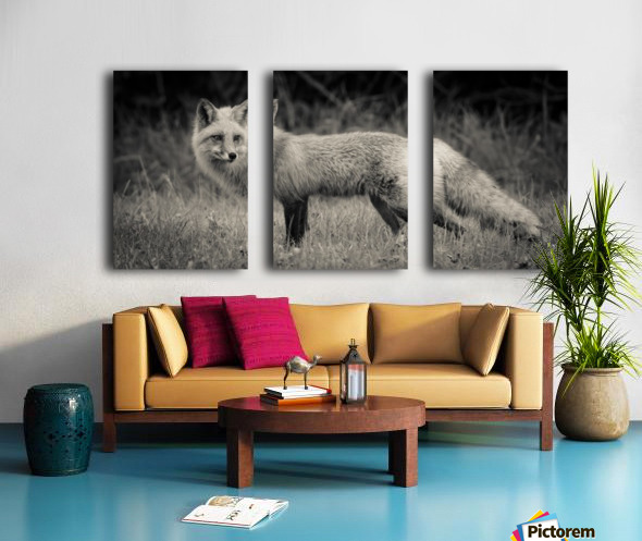 Red Fox Split Canvas print