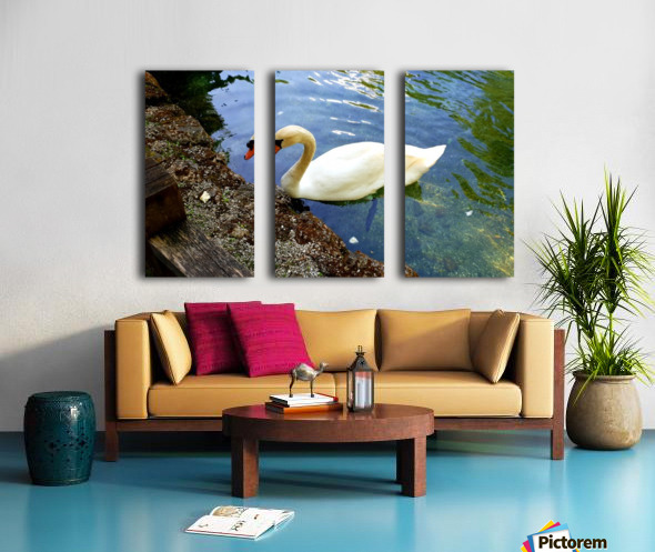 swan 16 Split Canvas print