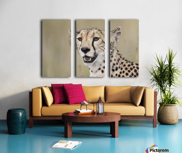 Cheetah Portrait by www.jadupontphoto.com Split Canvas print
