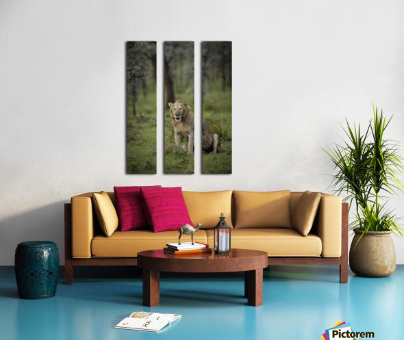A Lions Tongue Split Canvas print
