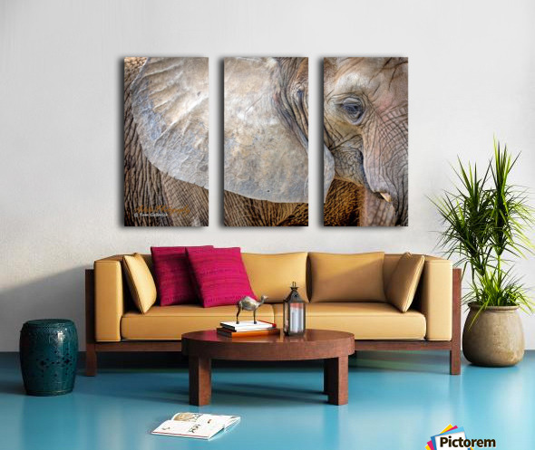Elephant - AP 3132 Split Canvas print