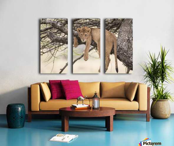 164A0128 Split Canvas print