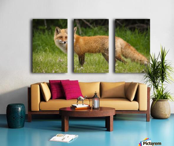 Red Fox Beauty Split Canvas print