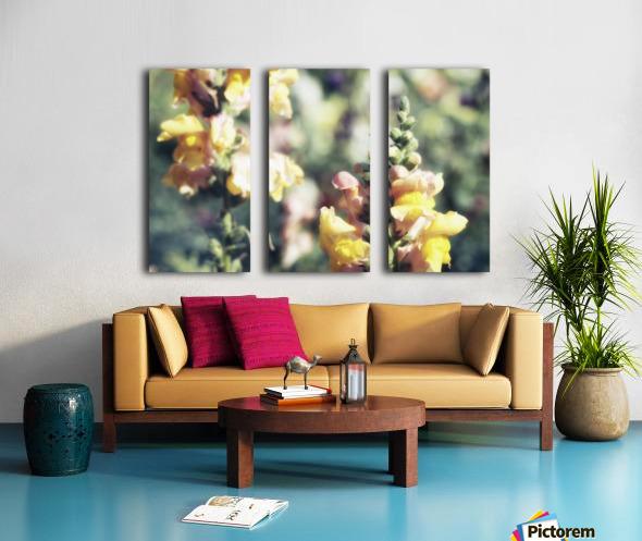 Lupinus Luteus Yellow Split Canvas print