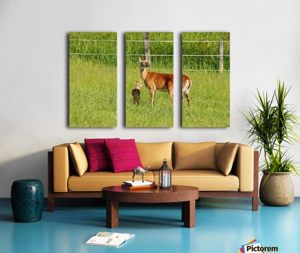 Whitetail Doe And Fawn Split Canvas print