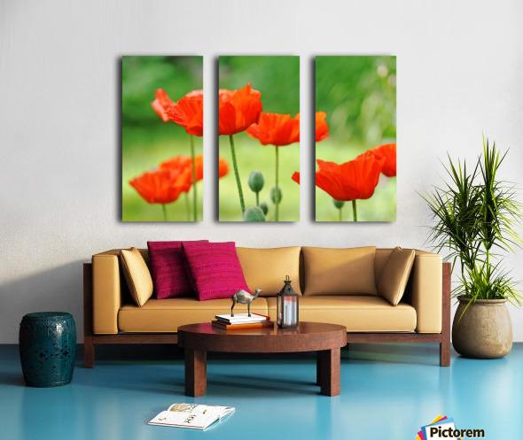 Morning Light Poppies Split Canvas print