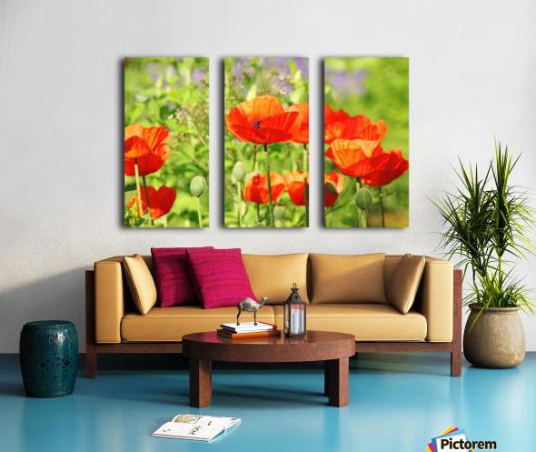 Poppy Garden Split Canvas print