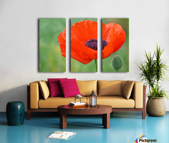 Poppy Red Split Canvas print