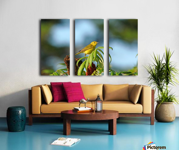 Yellow Warbler In Sumac Split Canvas print