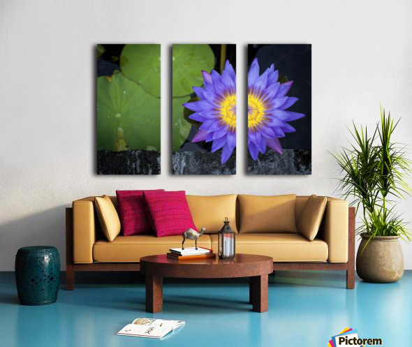 Violet Teratai Flower Split Canvas print