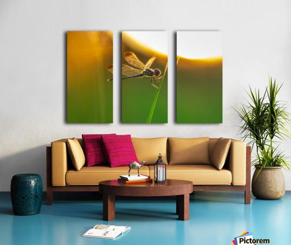 Dragonfly perching on grass twig Split Canvas print