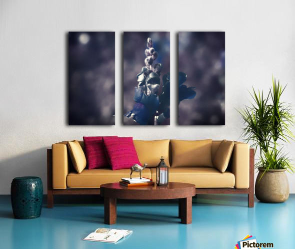 Lupinus luteus Dark Blue Split Canvas print
