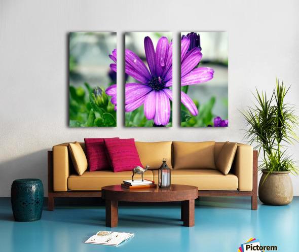 Waterdrop On Purple Flower Split Canvas print