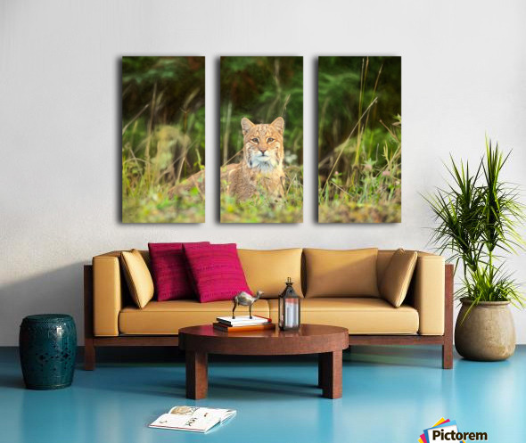 Bobcat Split Canvas print