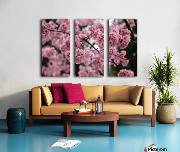 Sakura  Split Canvas print