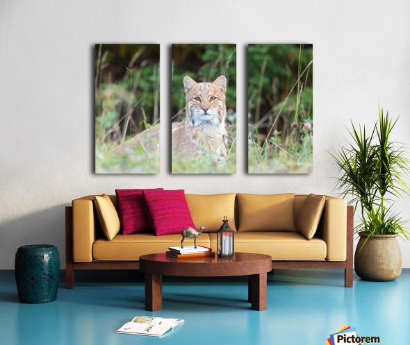 Wild Bobcat Split Canvas print