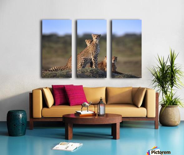 Cheetahs Family Split Canvas print