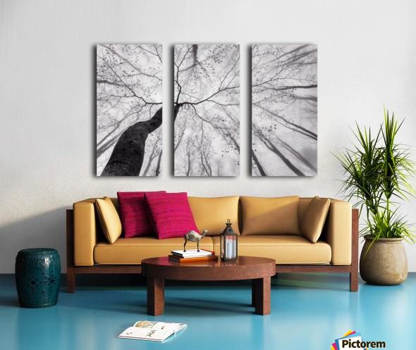 A view of the tree crown Split Canvas print