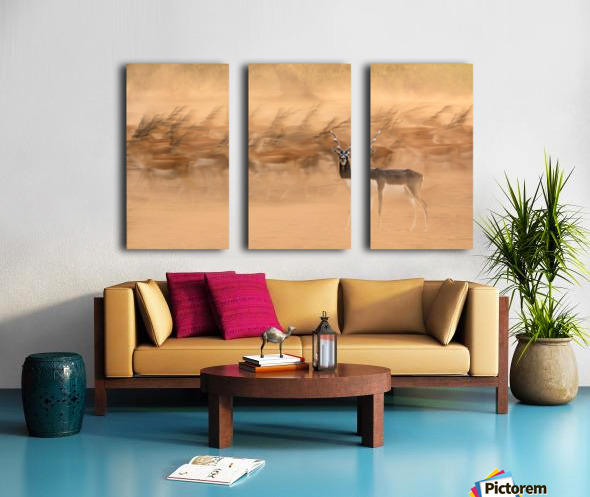Black Bucks Split Canvas print