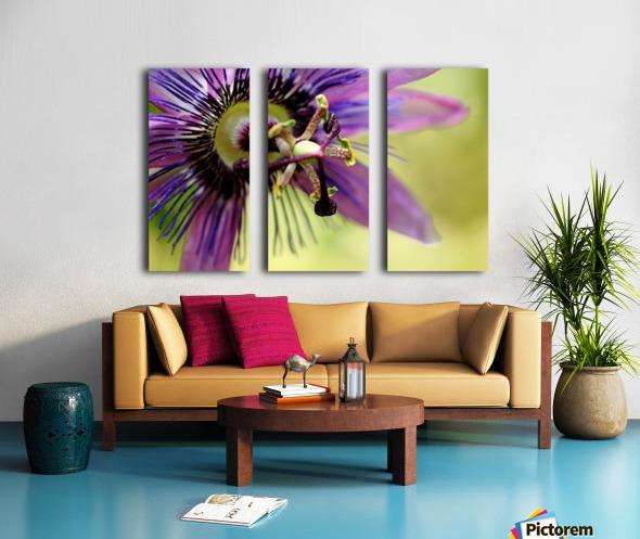Purple Passion Flower Split Canvas print