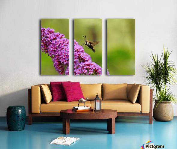 Hummingbird Moth Sipping Nectar Split Canvas print