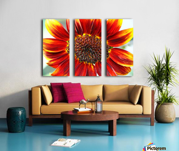Autumn Sunflower Split Canvas print